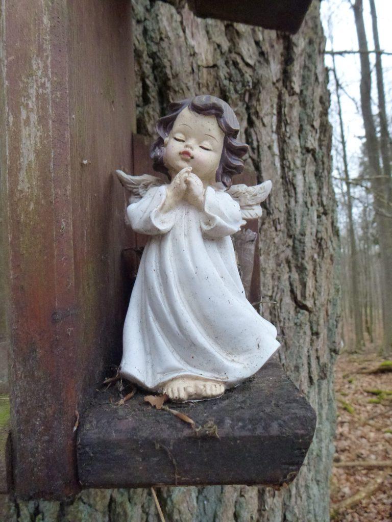 Die Madonna Eiche (4)